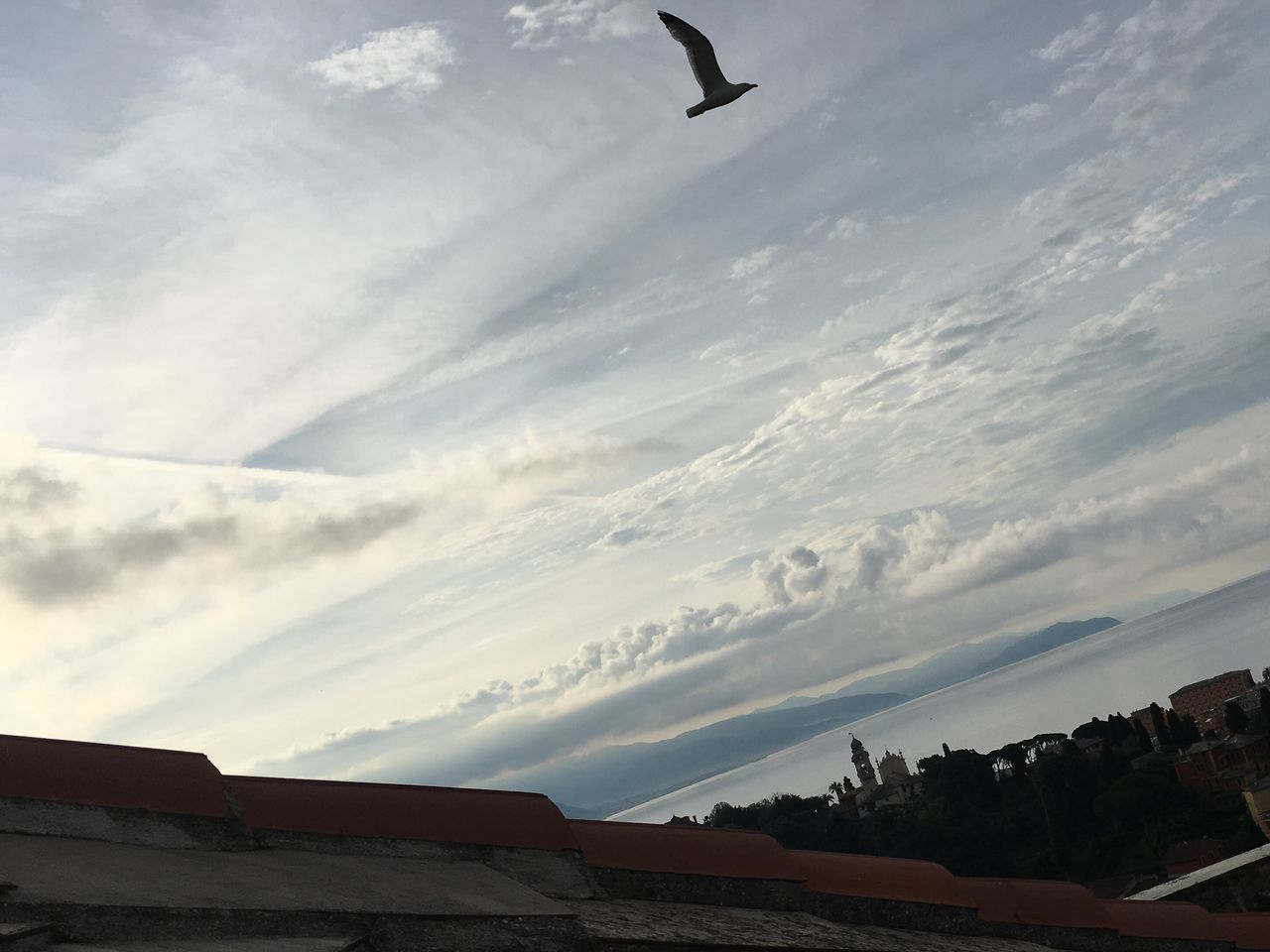 cloud - sky, sky, built structure, architecture, building exterior, low angle view, outdoors, flying, day, bird, roof, one animal, no people, nature, animal themes, beauty in nature