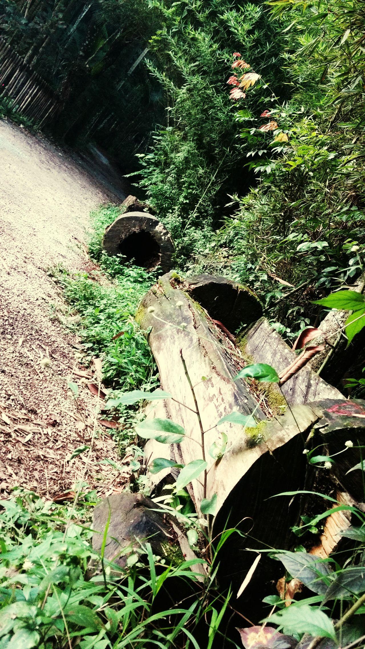 Um banco de madeira bruta e varias historias.