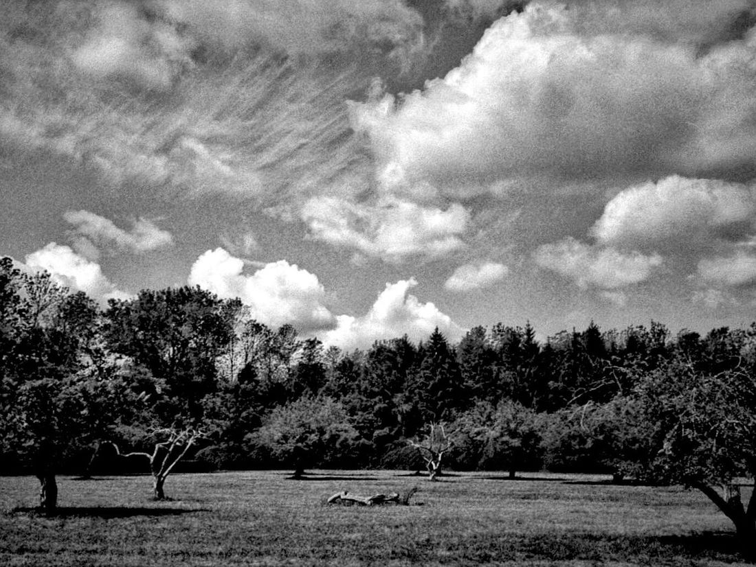 The Fallen Trees Clouds And Sky Blackandwhite Field Landscape Sunshine 35mm Olympus Xa2 Fallen Tree The Great Outdoors - 2016 EyeEm Awards Fine Art Photography
