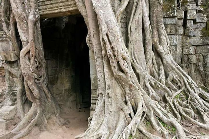 Doorway Entrance History Southeastasia Worldheritage Temple Jungle Cambodia Architecture Angkor Wat Southeast Asia Tomb Raider  Reclaiming Nature Ta Prohm Tree John Nelson Lifeasiseeit