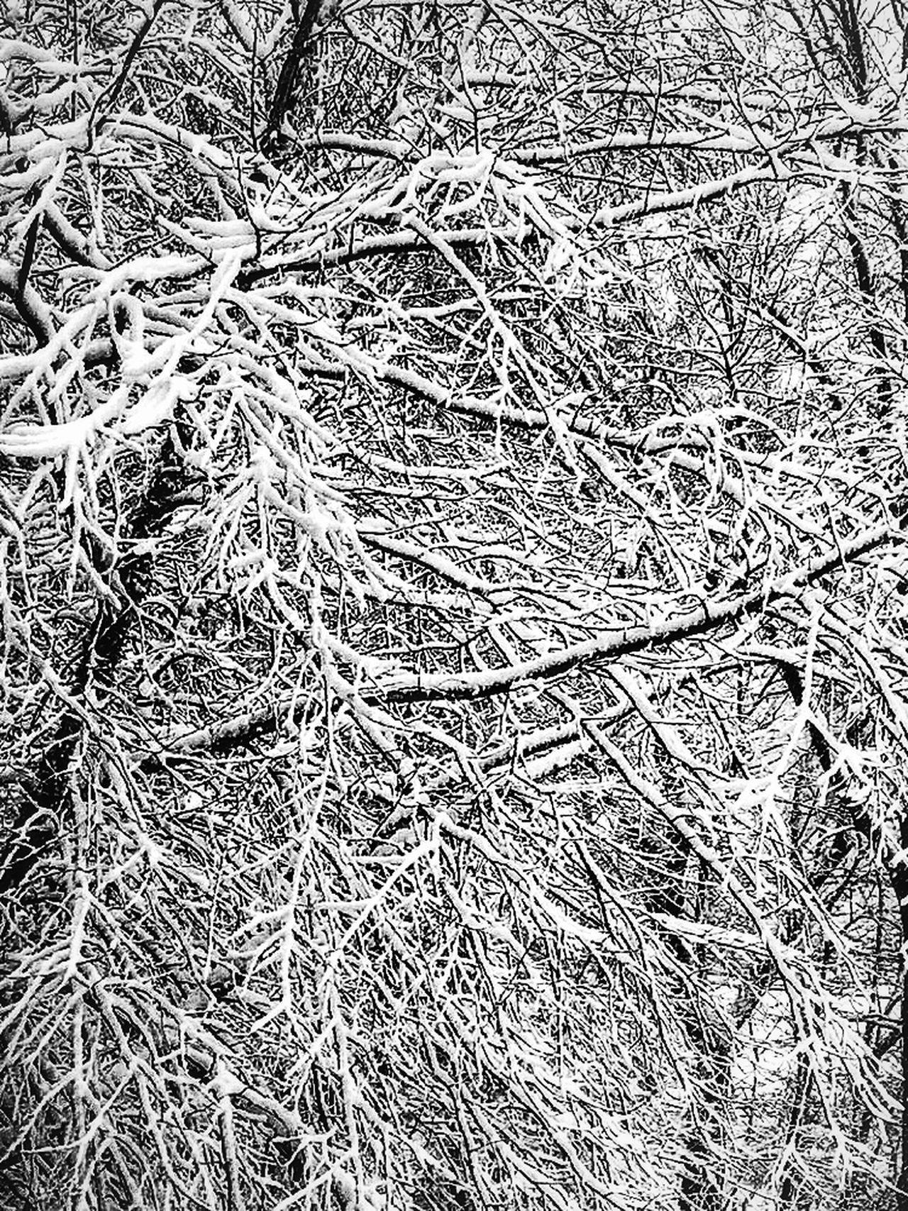 ❄️Tree❄️ Snow Winter Newengland Frozen Nature Not Cartoon Showcase: February