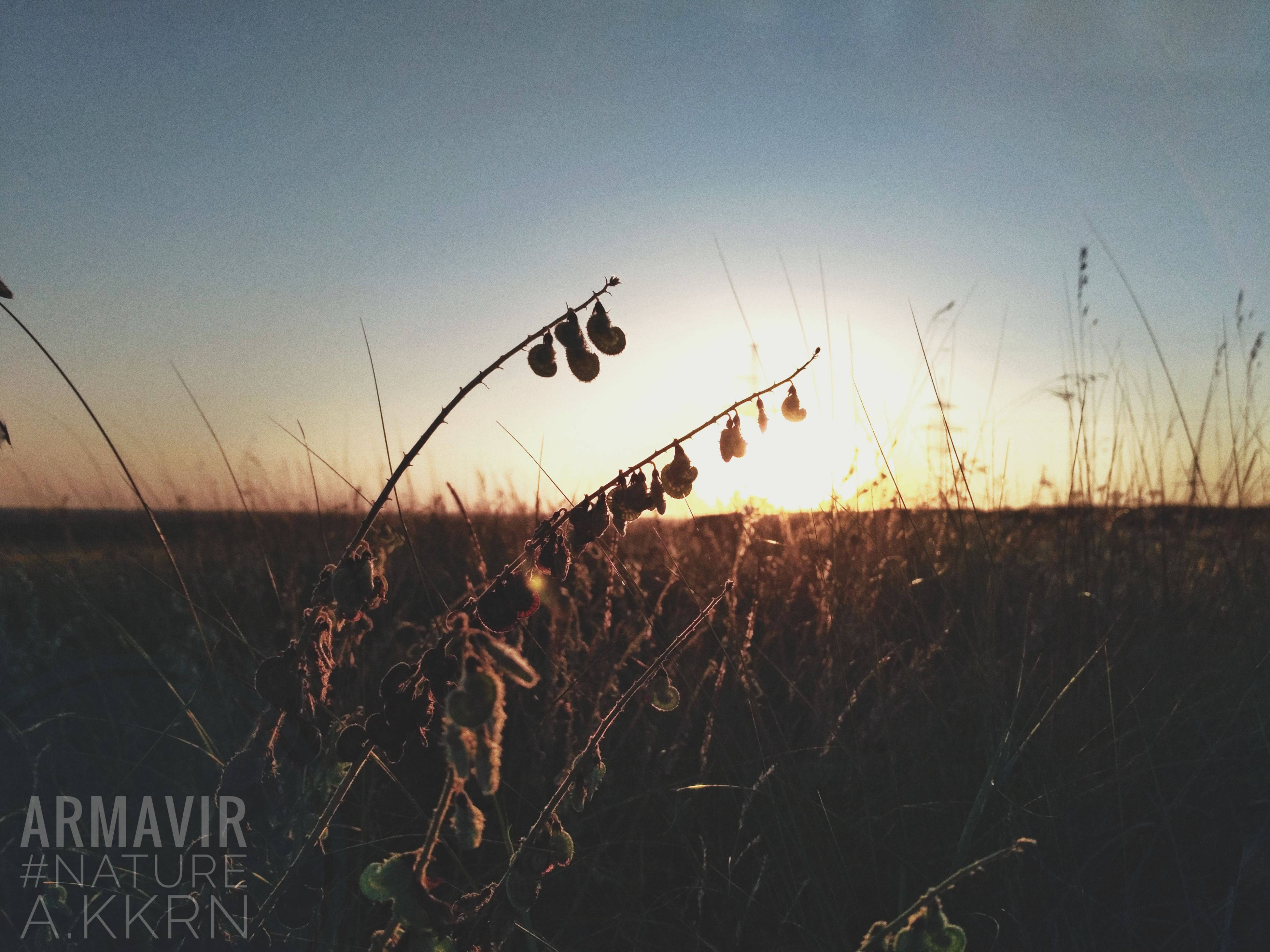 growth, sunset, plant, field, crop, agriculture, nature, farm, grass, outdoors, no people, rural scene, cereal plant, beauty in nature, sky, wheat, landscape, scenics, day, close-up