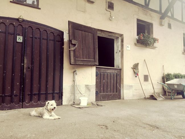 Dog Laying Down Barn Chilling ✌ Rural Life Old Buildings Doors Wooden Door