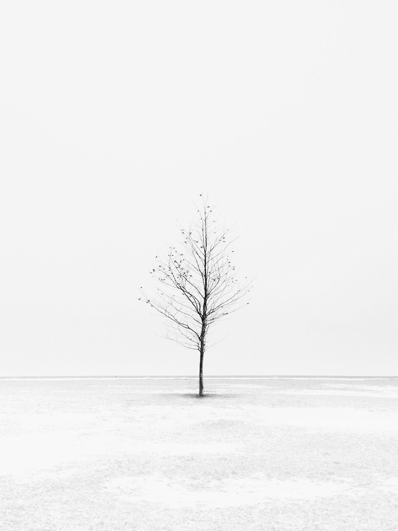 Nature Lone Tranquility Tranquil Scene Clear Sky Bare Tree Isolated Beauty In Nature Tree Scenics Landscape No People Branch Outdoors Day Sky Single Tree
