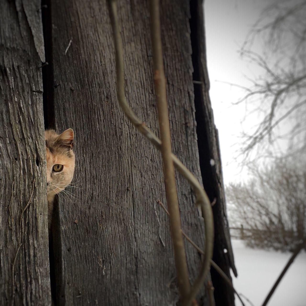Cat Peeping Through Wooden Wall