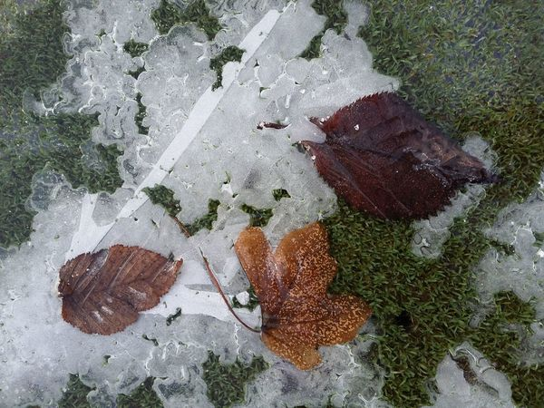 Fragility Outdoors Day Close-up Nature Leaves Tranquility Winter Moody Cold Weather Beauty In Nature No People Shape Gold Colored Smartphonephotography Smartphone Photos Smartphone Photography Leaf Ice Sunlight Shadow One Person Animal Themes Winter Tones
