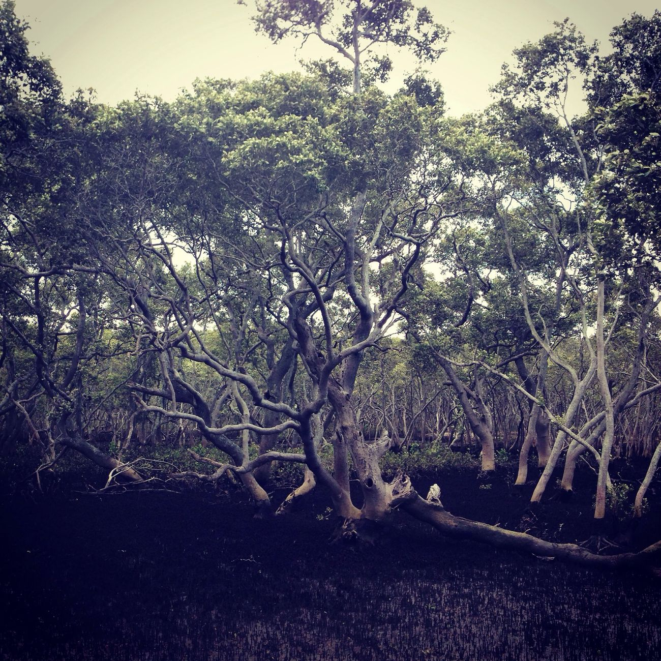 Wynnum Mangroves Mangroves Wynnum Wilddlife Trees