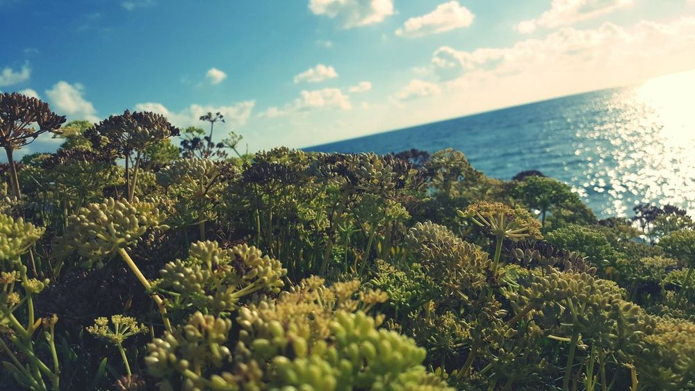 Seaside Beachphotography Flowrrs And Plants Beauty In Nature