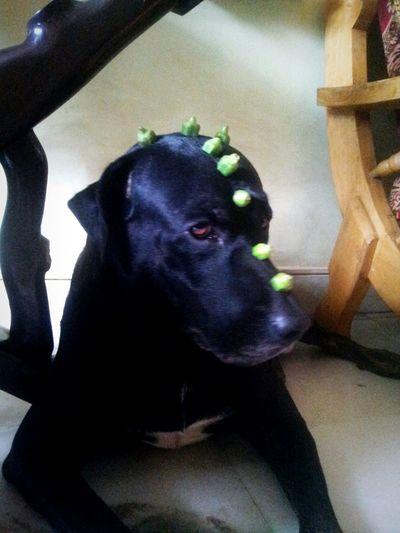 Dogslife Dinodog Dogstagram Ladiesfinger :-) Toppings Hello World Dnd WHYME Hi!