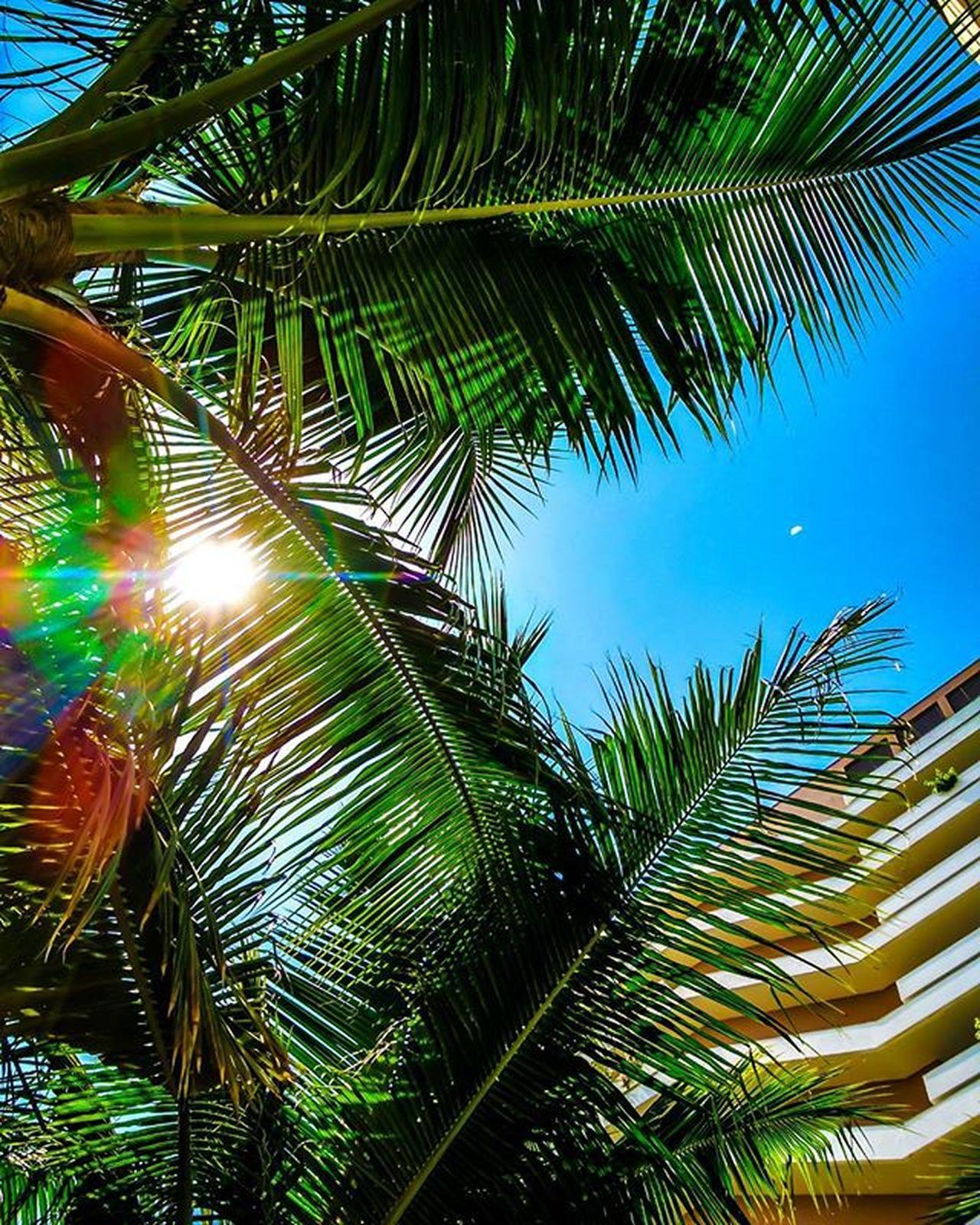 Palm Lensflares Mi4 😁😁