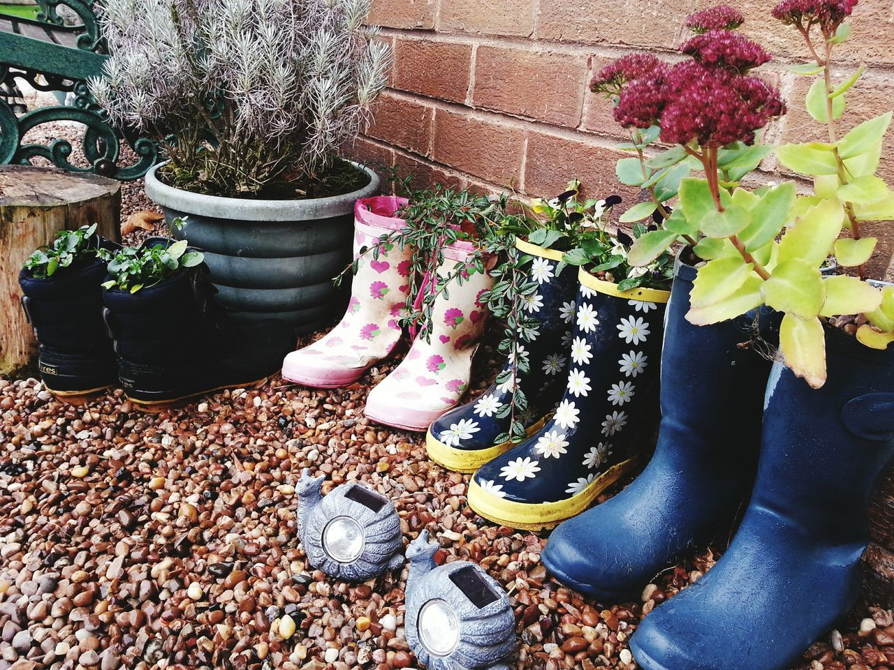 Plant Growth Flower Nature Day No People Outdoors Recycled Recycle Art Recycled Materials Wellington Boots Wellies  Gum Boots Upcycled Plant Pots Garden Garden Photography