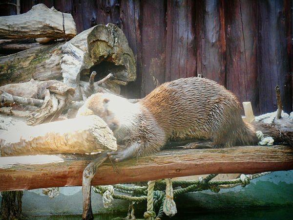 💮Photo from my photo archive💮 Animal московскийзоопарк Zoo Moscow Zoo Moscow, Москва Russia россия Welcome Hello World Russian Nature природа и красота