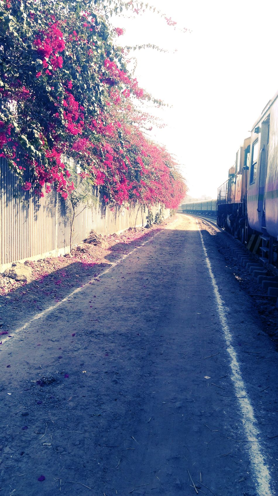 Train_of_our_world Outdoors Nature Sunlight The Way Forward Road Tree Sky Day Built Structure No People First Eyeem Photo The Secret Spaces