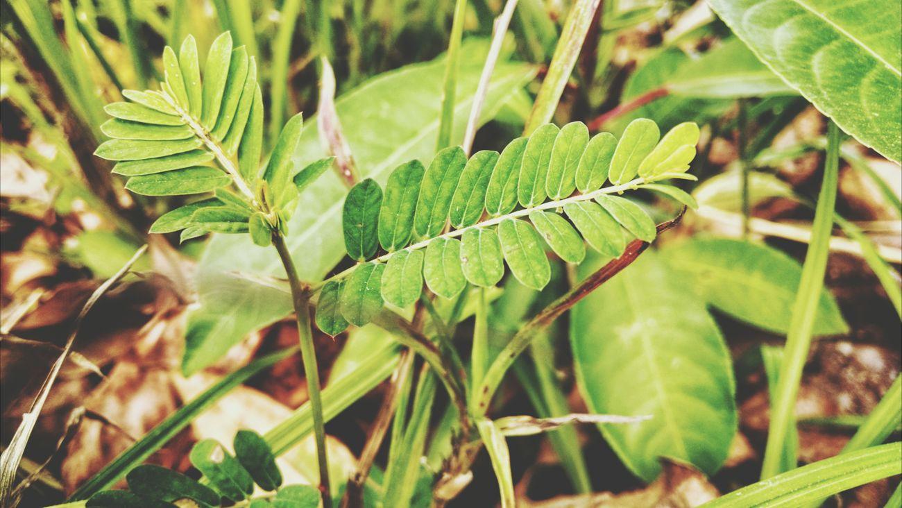 Leaves Plants Nature Naturelovers