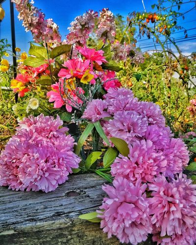 Flower Growth Beauty In Nature Nature Outdoors Pink Color No People Day Blossom Plant Freshness Springtime Fragility Tree Blooming Sky Close-up Flower Head