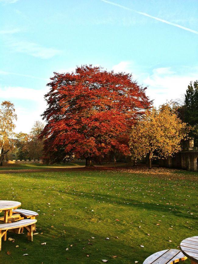 Autumn at auckland castle Auckland Castle Bishop Auckland County Durham Trees Autumn Colors Autumn Leaves Autumn🍁🍁🍁