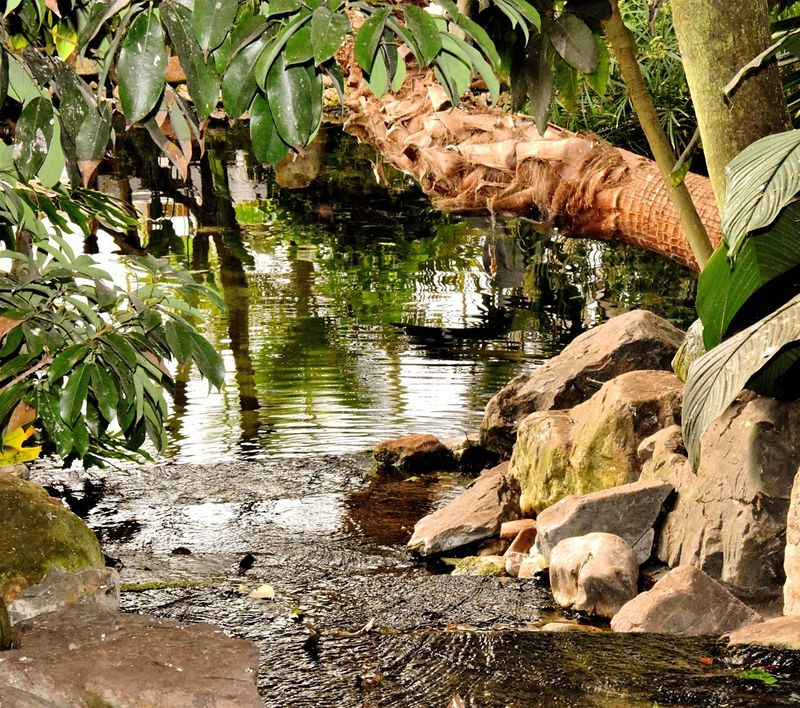 Tropical Paradise Flowers, Nature And Beauty Exotic Water Habitat Plants Flora Fauna Balancing Elements Heat - Temperature Moist Sunshine Above The Ground Waterfall #water #landscape #nature #beautiful Growth