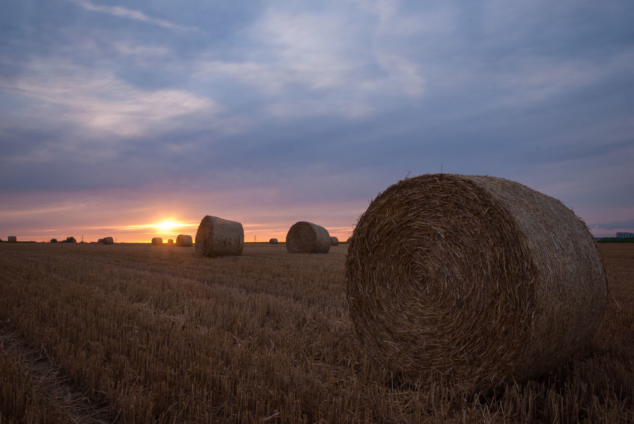 bale, hay bale, agriculture, hay, field, harvesting, rural scene, farm, sky, crop, tranquility, tranquil scene, landscape, beauty in nature, sunset, nature, scenics, no people, haystack, outdoors, day