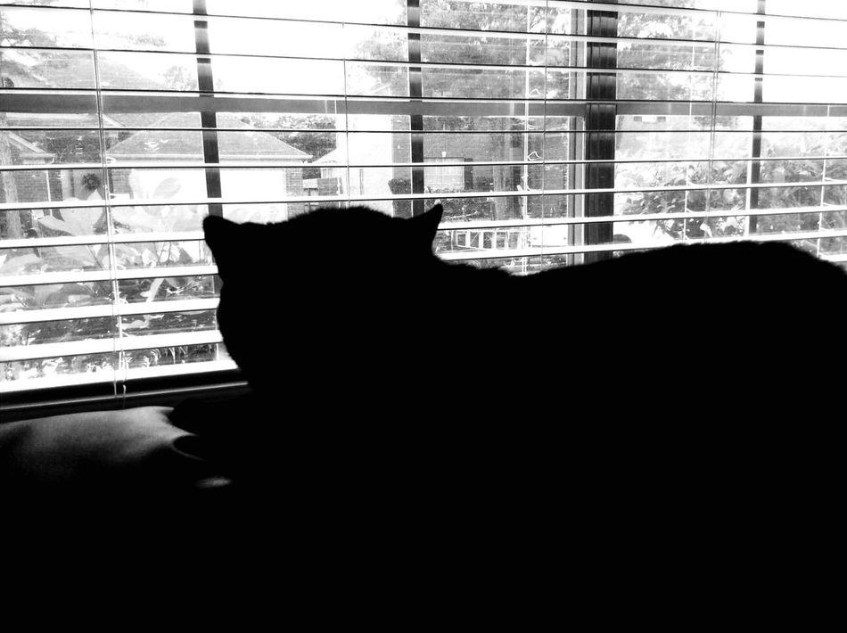 Happy Caturday Blackandwhite Photography Black Cat Black Cat, Window