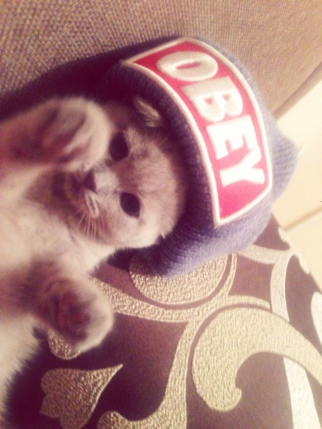My little cat😻 My Little Cat☺