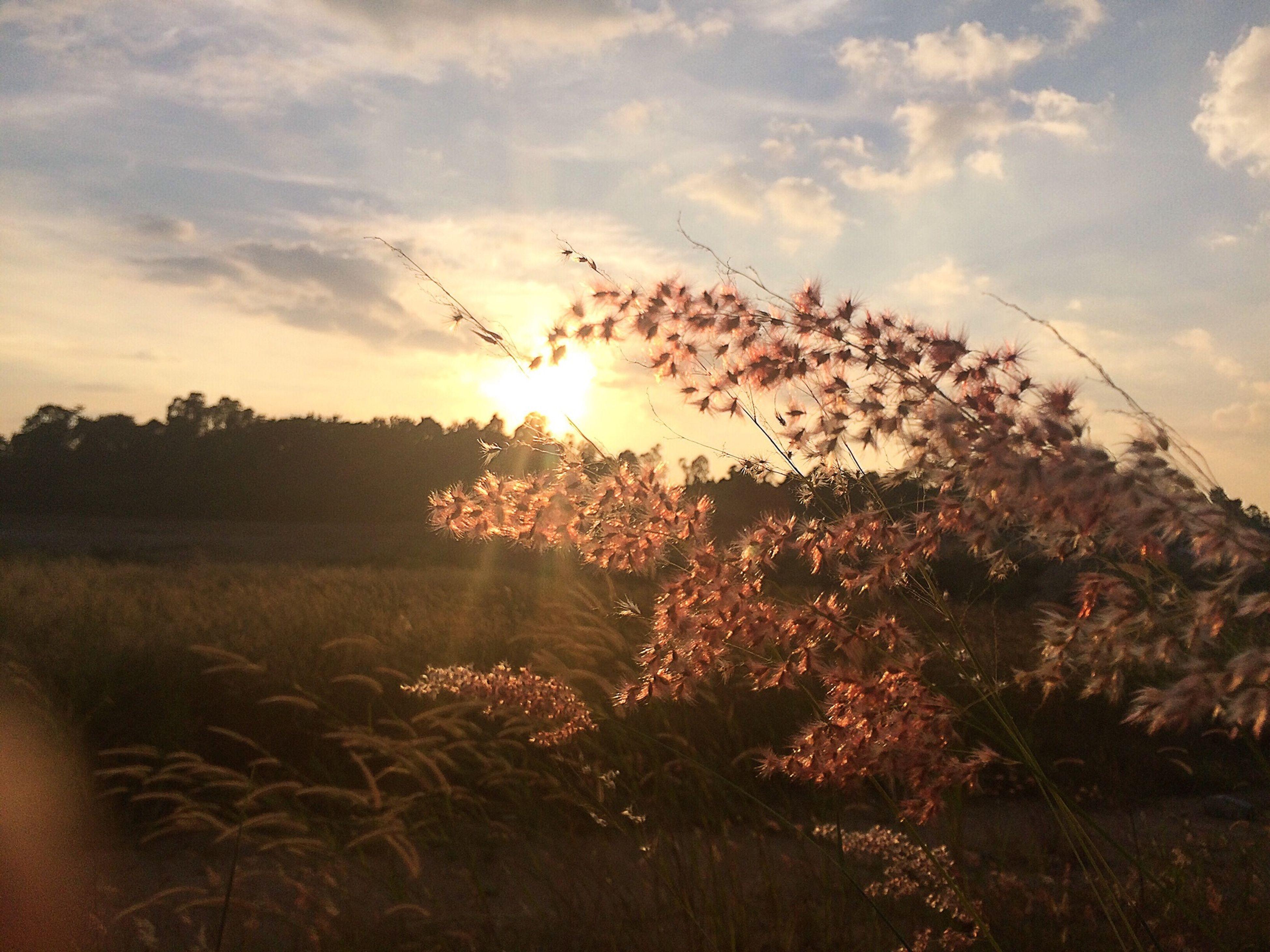 sun, sunset, sky, tranquil scene, beauty in nature, scenics, tranquility, sunlight, nature, tree, silhouette, sunbeam, cloud - sky, growth, plant, bird, landscape, orange color, idyllic, lens flare