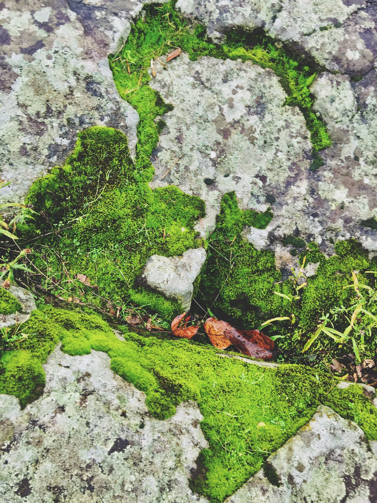 Heart Shapes Nature Outdoors Heart Shapes In Nature Green Color Growth Close-up Perspective Shapes In Nature  Views Natural Condition Layers And Textures Textured  Beauty In Nature Moss & Lichen Abstract Nature Weathered Abstractions Power In Nature Rock Formation