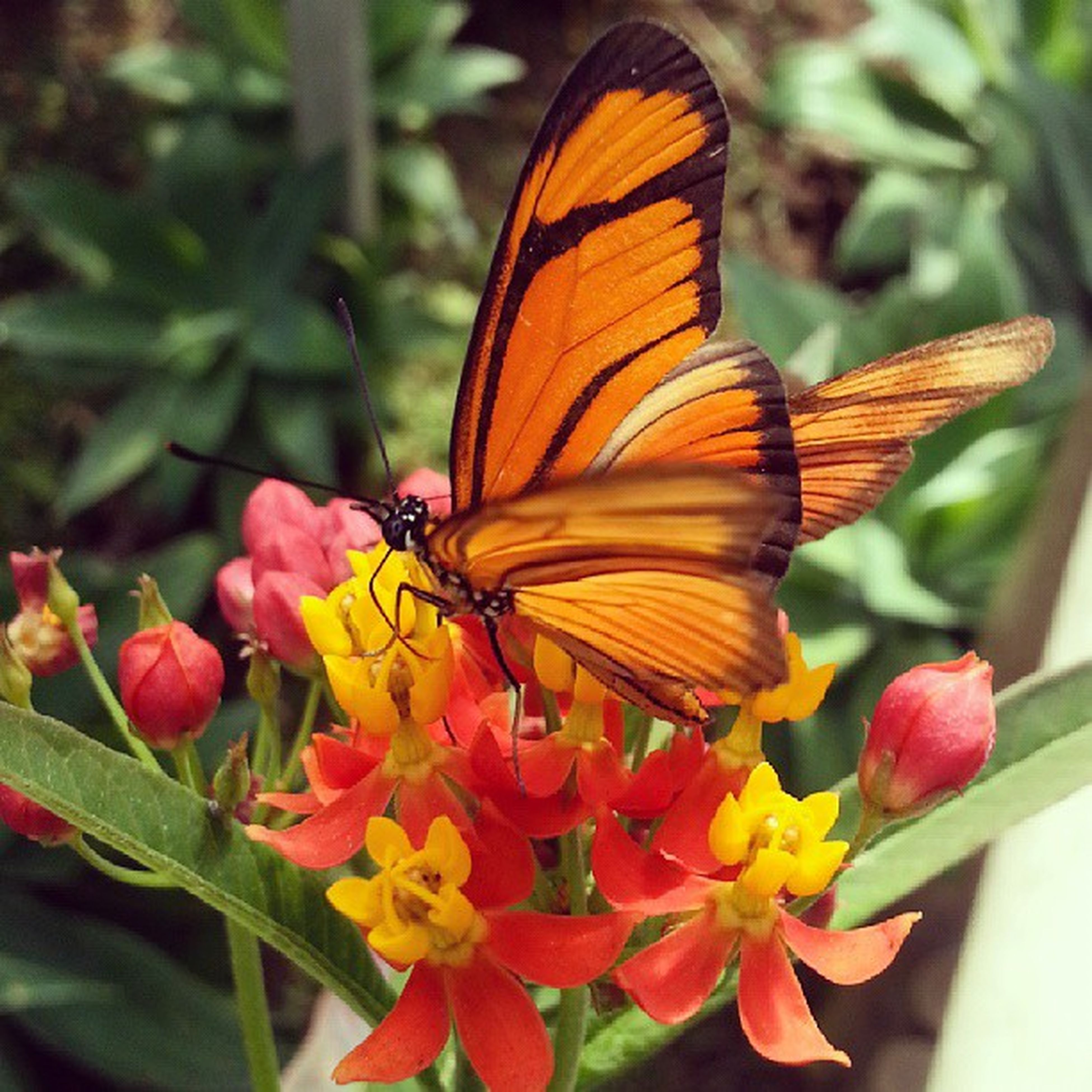 flower, insect, one animal, animal themes, animals in the wild, butterfly - insect, wildlife, petal, fragility, freshness, butterfly, pollination, beauty in nature, close-up, flower head, orange color, growth, focus on foreground, plant, nature