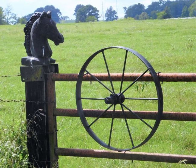 Wagon wheel gate. Horse head post. One Animal Day Grassland Outdoors Park Rural Scene Gate Gateway Post Pasture Fence Texaslife