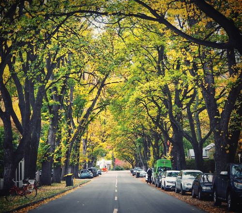 Autumn Tree Change Road Leaf Outdoors The Way Forward Beauty In Nature Growth Branch Street Tree Trunk Bare Tree Transportation TOWNSCAPE Town Green Road Arrow Town New Zealand New Zealand Impressions No People Greenery Freshness Silent Time