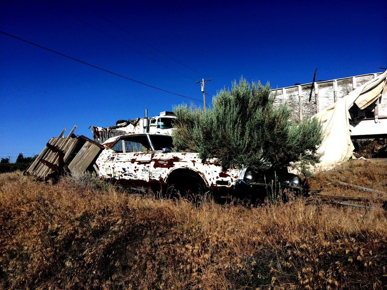 Abandoned Abandoned Vehicle Broken Dreams Bushstang Car Clear Sky Growth Mustang Nature Outdoors Pickers Rural Scene Sunny Vehicle Vintage