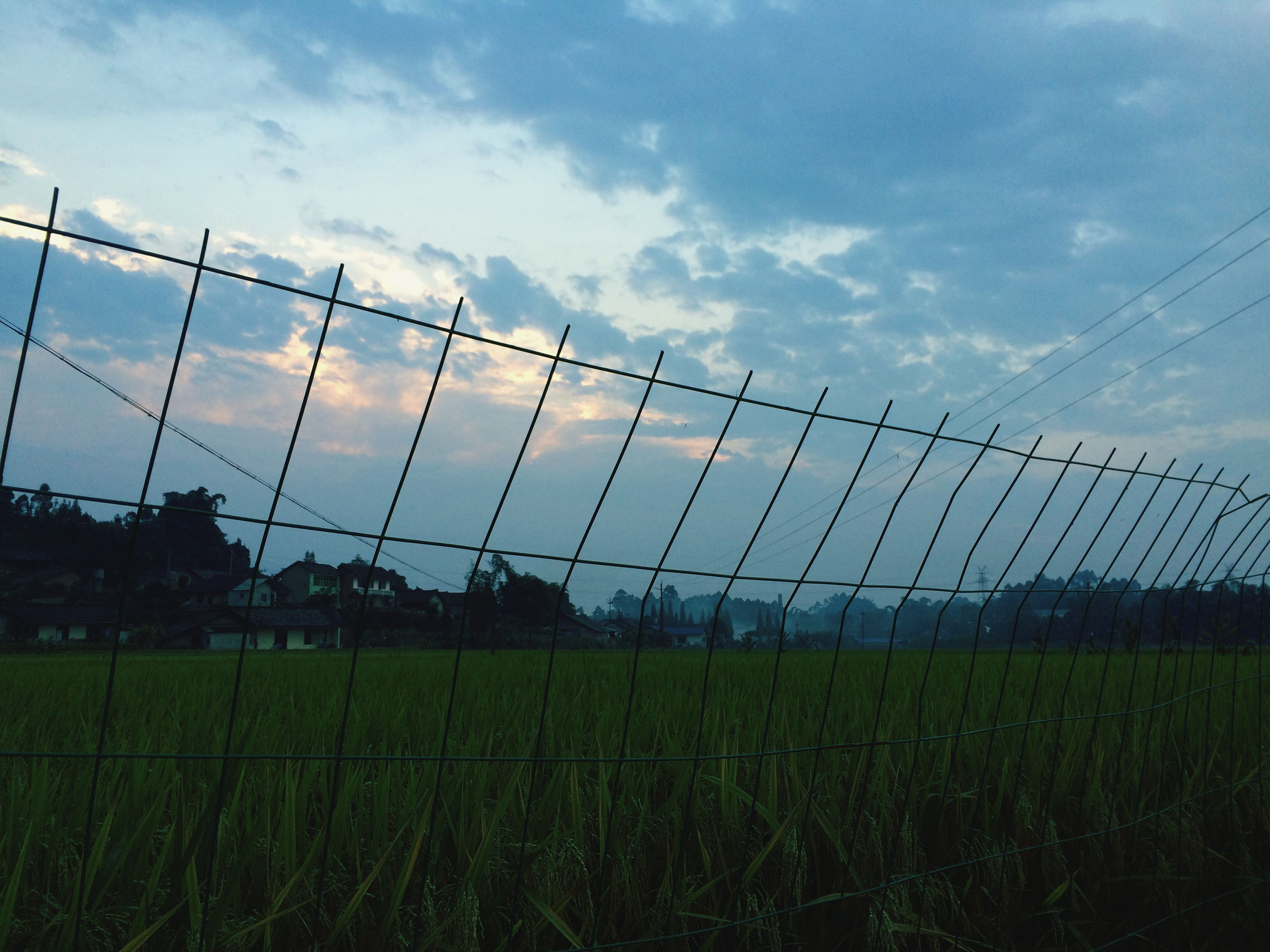 sky, field, grass, landscape, cloud - sky, fence, rural scene, cloud, agriculture, nature, growth, farm, cloudy, green color, grassy, tranquility, tranquil scene, protection, no people, outdoors