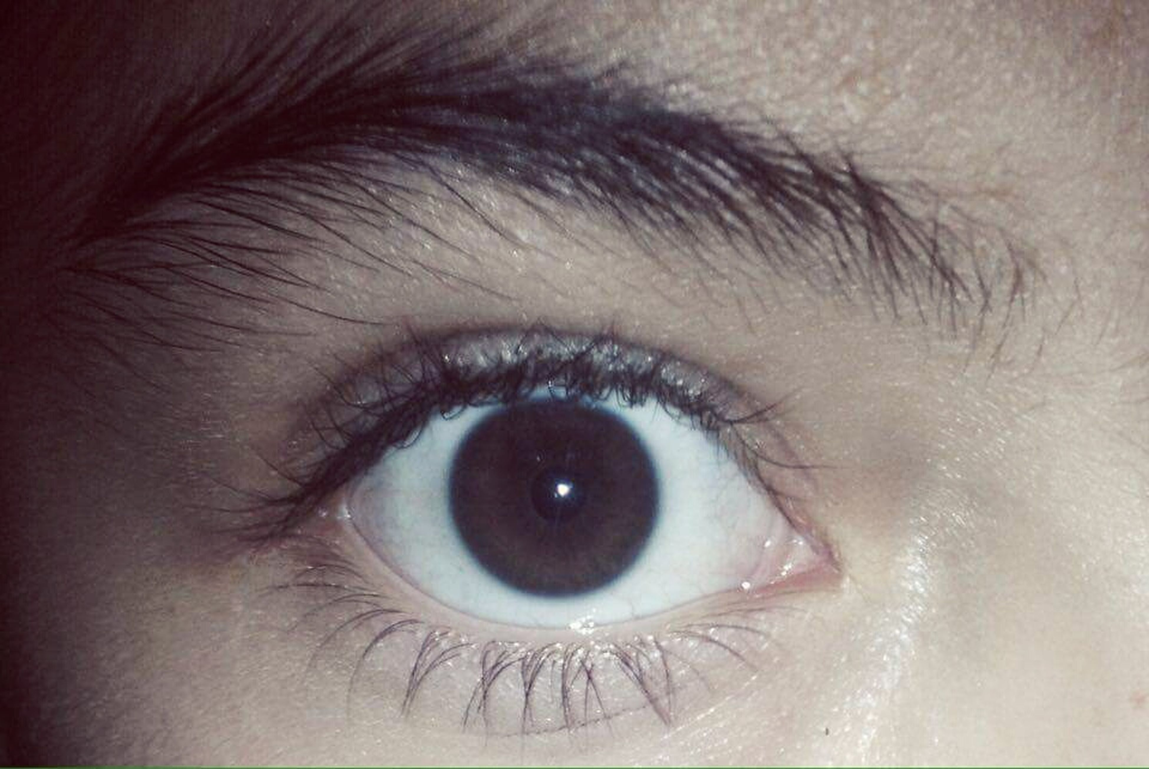 human eye, eyesight, human body part, eyelash, real people, close-up, sensory perception, human skin, one person, eyebrow, eyelid, eyeball, iris - eye, backgrounds, indoors, vision, day, people