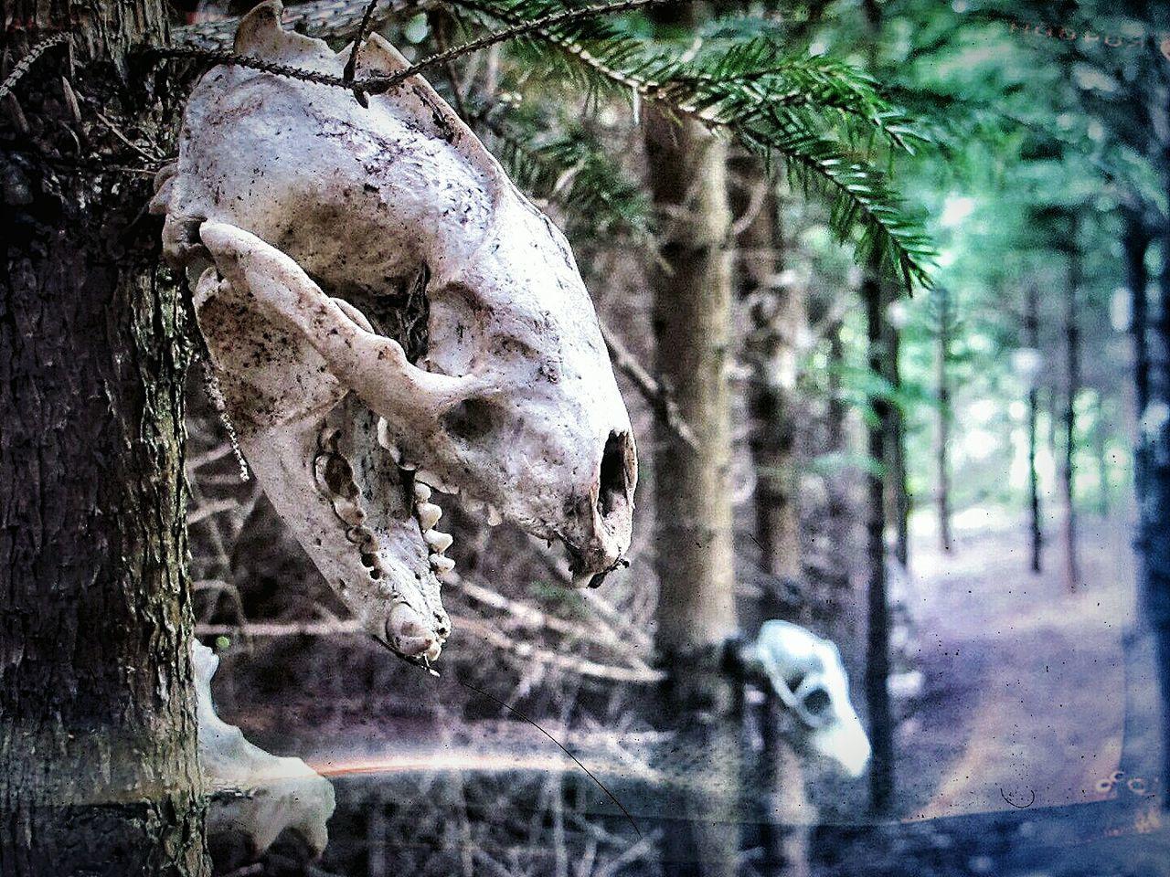 Close-Up Of Skull On Tree Trunk