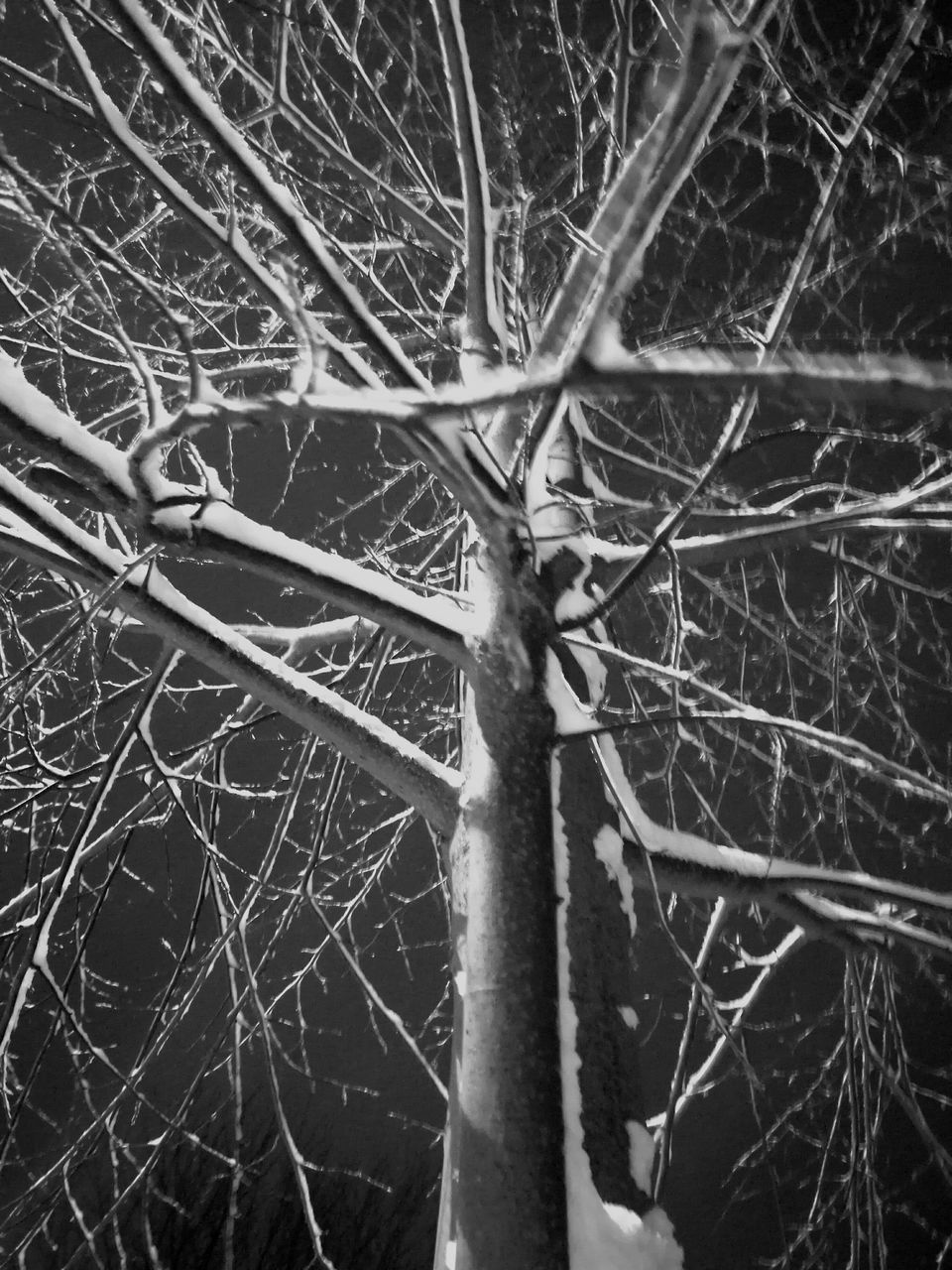 bare tree, branch, outdoors, day, tree, nature, close-up, no people