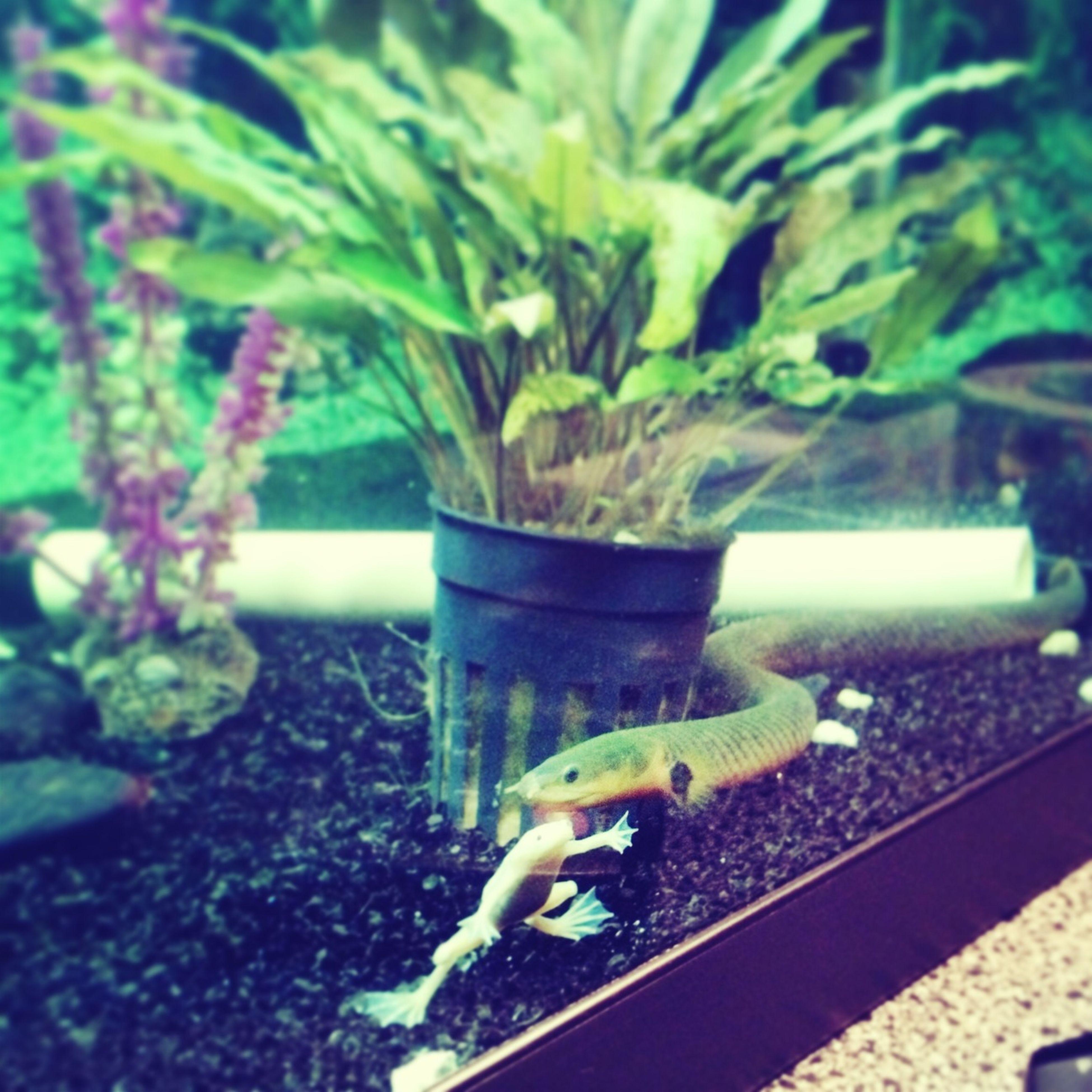 #aquarium #aal #snake #albino #frog