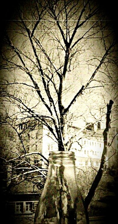 Oldpicture Bottle Trees History Through The Lens