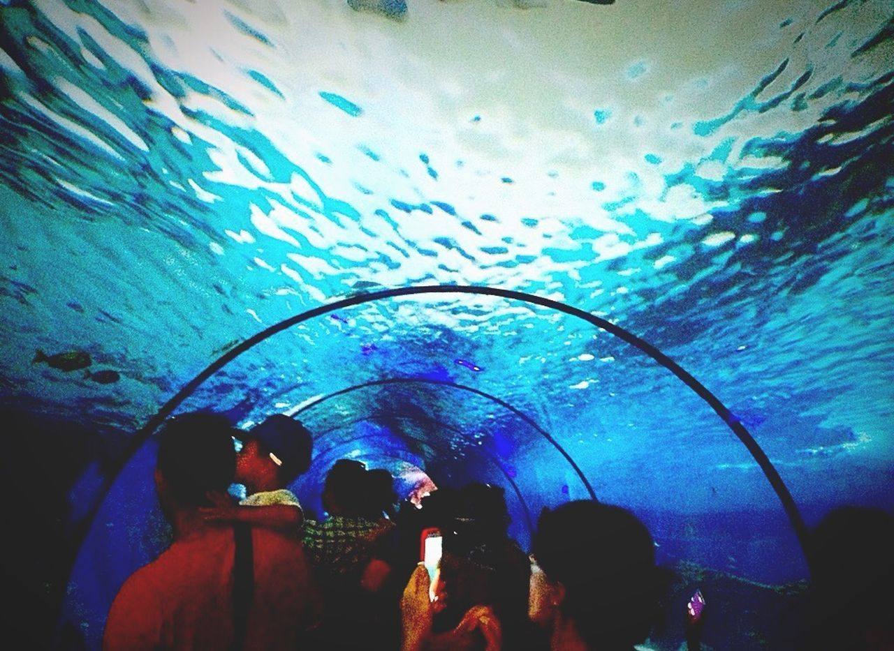 Tunnel Tourists Water Watertunnel Blue Marineland Underthesea