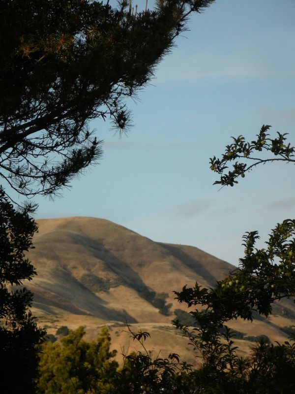 Alum Rock The Purist (no Edit, No Filter) The Other Side Of San Jose Mountain Range Horizon Over Land Samsung Camera Through The Trees Blue And Gold Siliconvalley via Fotofall