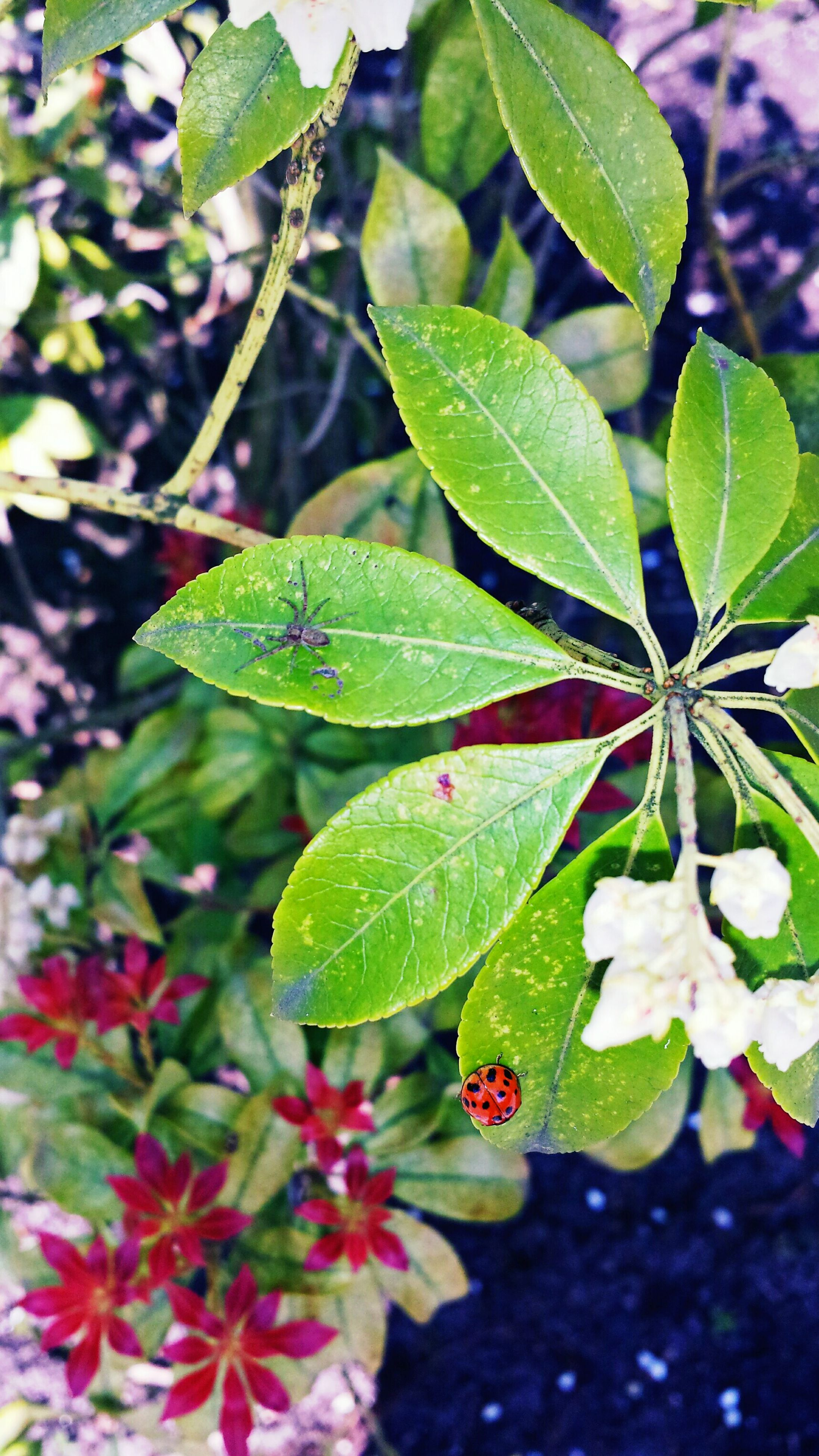 leaf, growth, freshness, nature, close-up, plant, green color, beauty in nature, focus on foreground, fragility, flower, leaves, leaf vein, outdoors, day, branch, no people, selective focus, botany, season