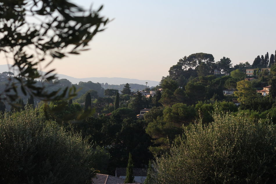 Hills over Cannes, France Architecture Beauty In Nature Built Structure Clear Sky Day France Growth Holiday Holidays Landscape Mountain Nature Nature No People Outdoors Scenics Sky Summer Evening Tranquility Tranquility Travel Destinations Tree Vacation Vacations