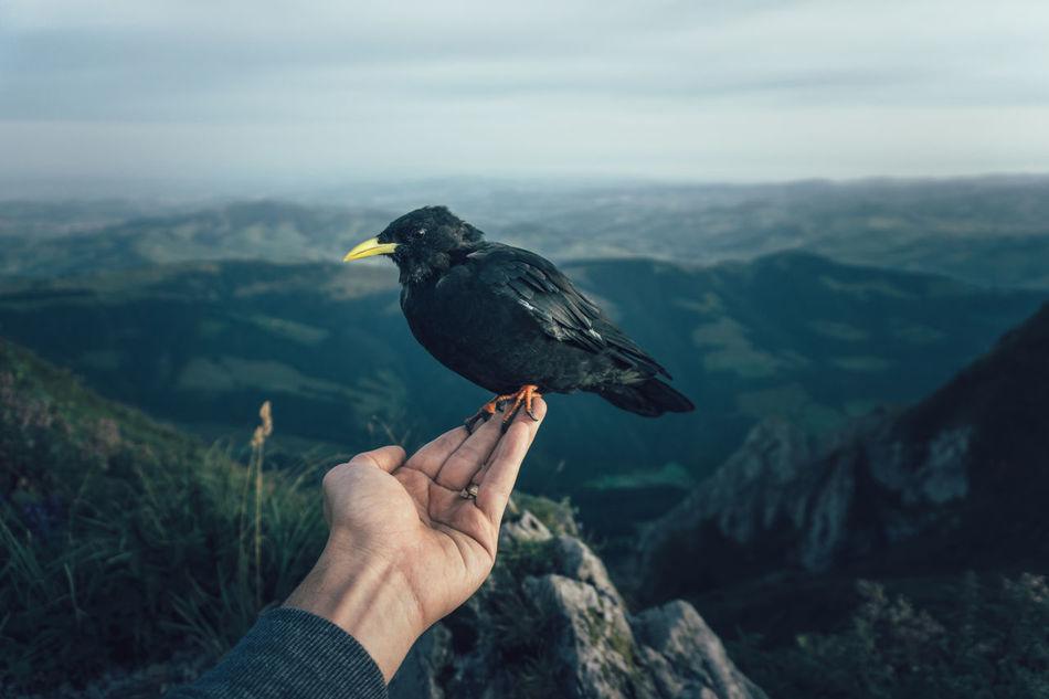 Beautiful stock photos of wildlife,  Animals In The Wild,  Beak,  Beauty In Nature,  Bird