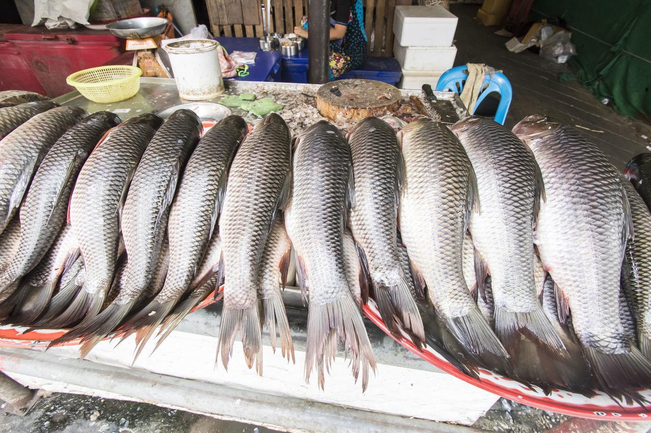 dead fish in market Dead Fısh Dried Fish  Fish Fish Market Food Market Outdoors Sea Seafood