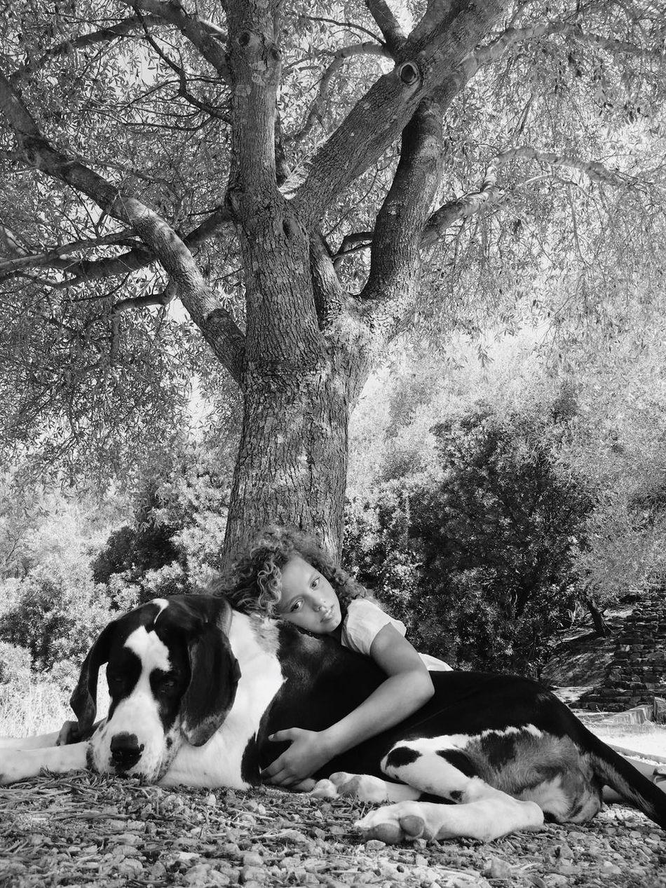Beautiful stock photos of great dane,  30-34 Years,  Canine,  Caucasian Ethnicity,  Childhood