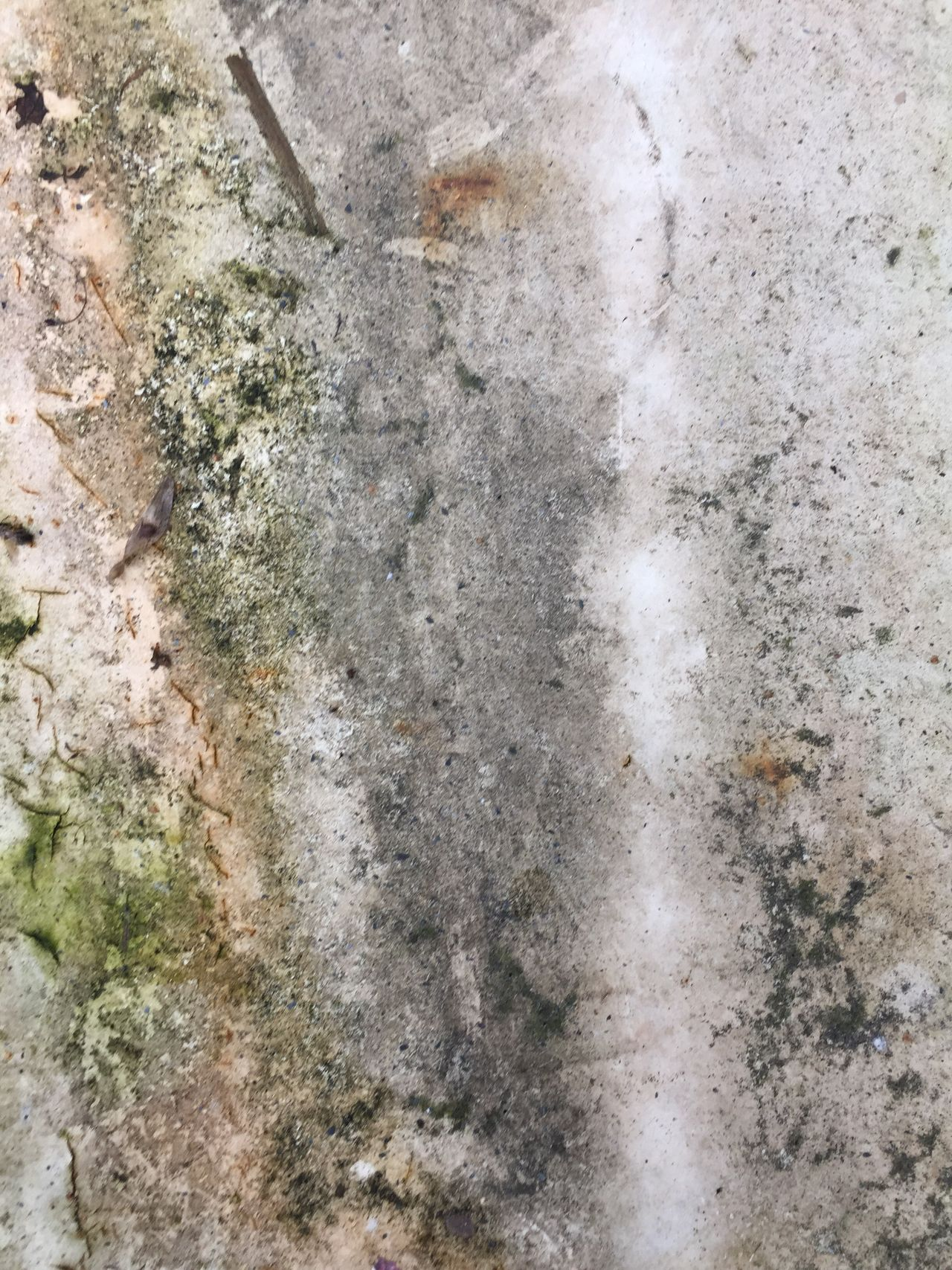 Textured  Backgrounds Full Frame Outdoors Close-up Dirt Table Moss Dirty Table No People White Background