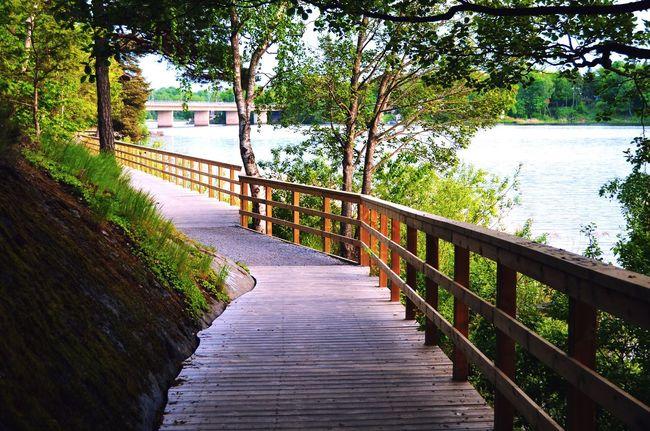 Farsta Summer Nikonphotography Nikon D5100  Taking Photos Enjoying Life Lake Bridge Myview Nature