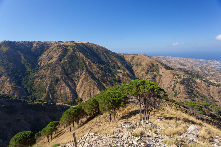 Calabria (Italy) MessinaStrait Pine Arid Climate Aspromonte Beauty In Nature Day Landscape Messina Strait Mountain Mountain Range Nature No People Outdoors Physical Geography Pine Trees Remote Scenics Sky Tranquil Scene Tranquility Tree