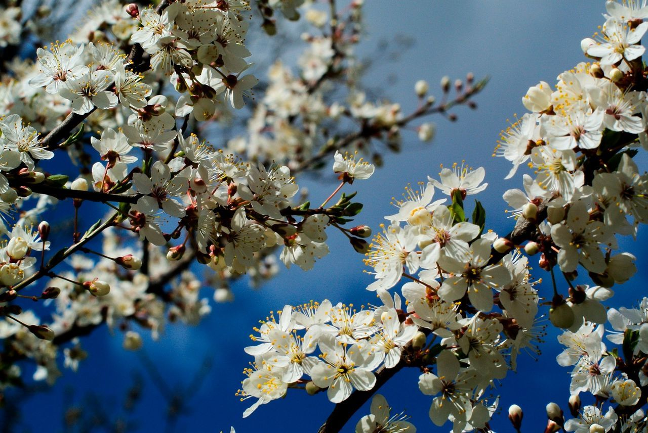 Весна. Все цветёт Spring Nikon 1 V1 Nikkor 50mm