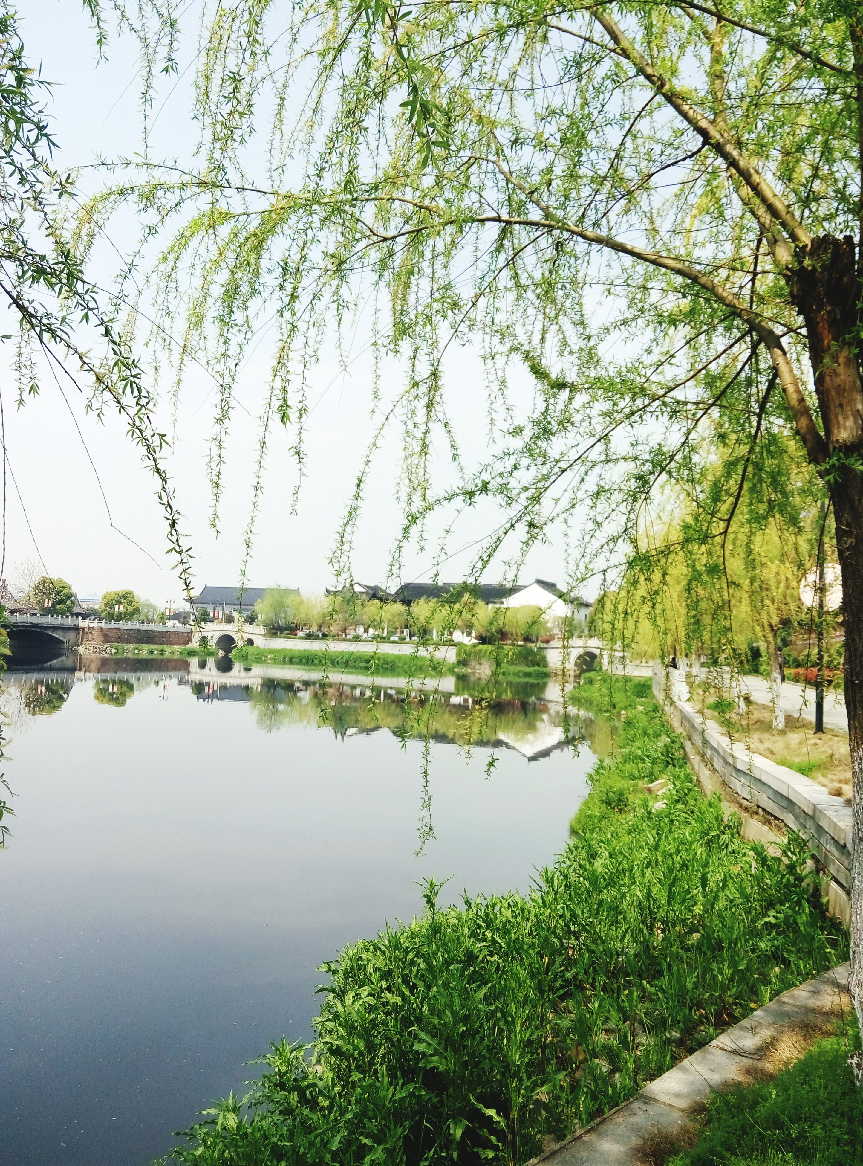 water, tree, reflection, tranquility, lake, green color, growth, tranquil scene, nature, beauty in nature, scenics, river, branch, pond, plant, day, sky, clear sky, outdoors, no people
