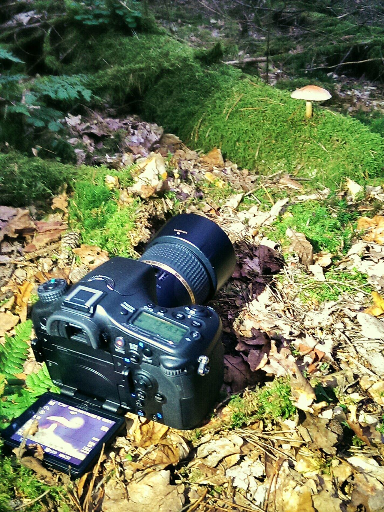 My hobby My Hobby My Camera Taking Photos Sony A77 Inthewoods Mushrooms