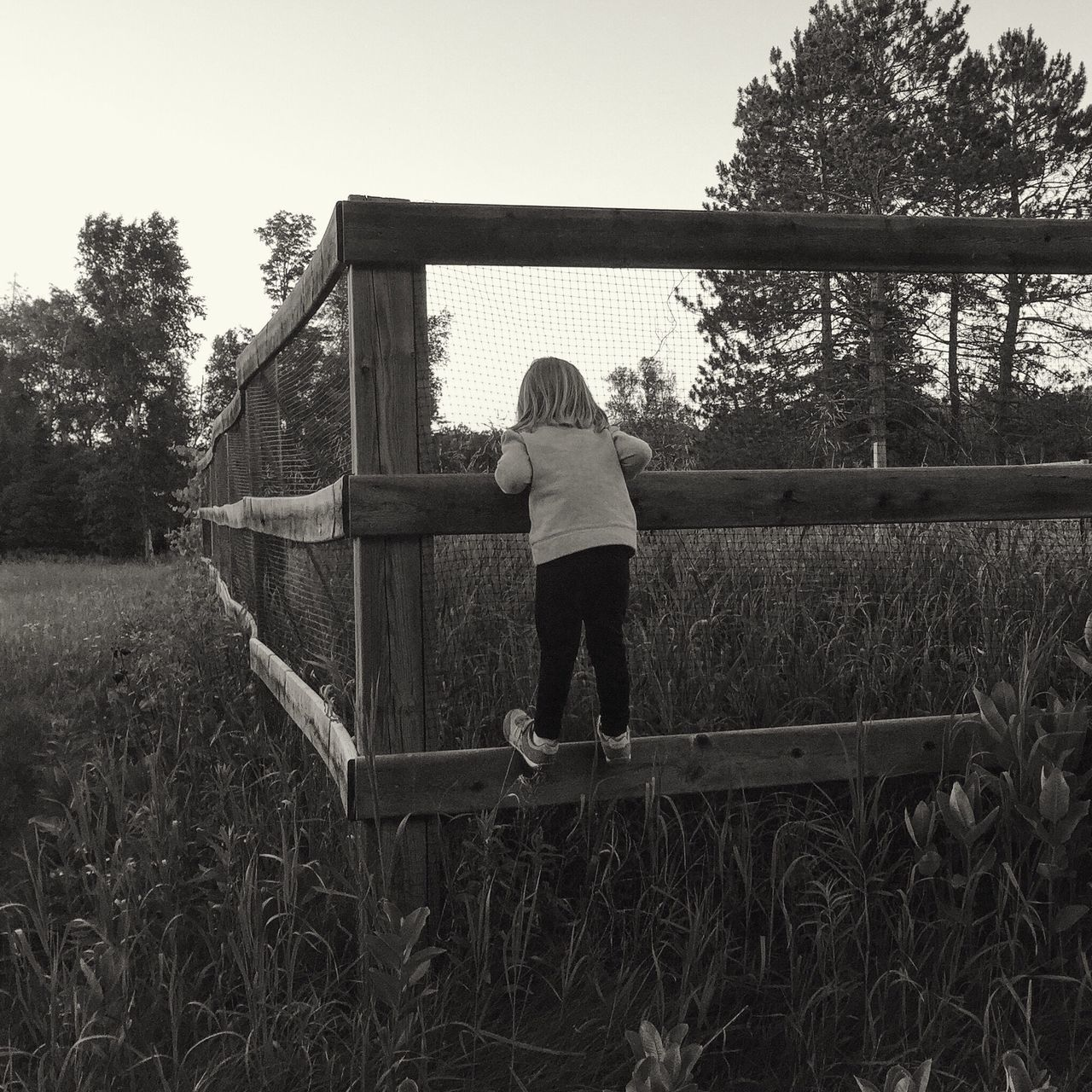 On the fence EyeEm Nature Lover Iphonography Puremichigan Nature On Your Doorstep Kids Youmobile Countryside Blackandwhite